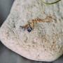 Серьги-подвески «Миражи» с синими кристаллами-хамелеонами Сваровски